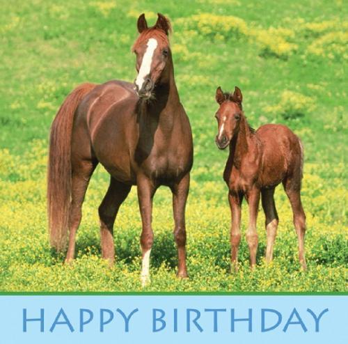 přání k narozeninám s koněm Divocí koně přání k narozeninám s koněm